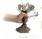 tree removal icon