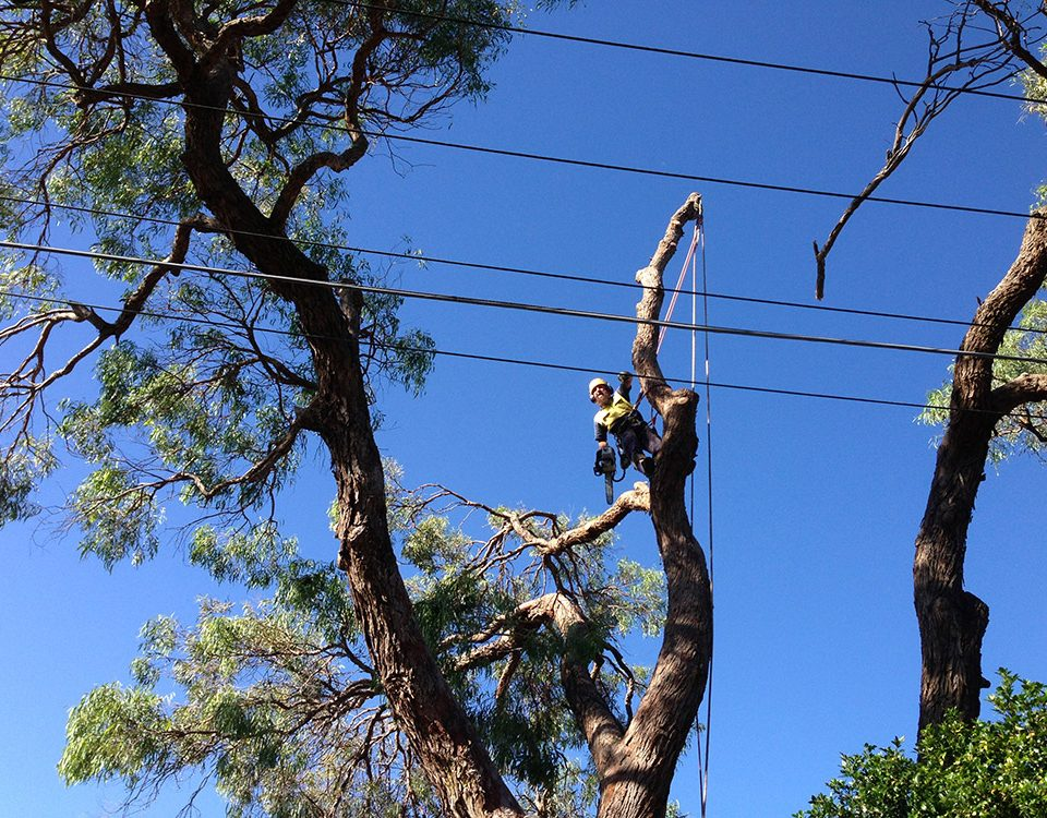Professional Tree Care Services in Sydney