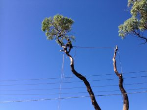 Professional Tree Cutting Services by Treemendous Tree Care