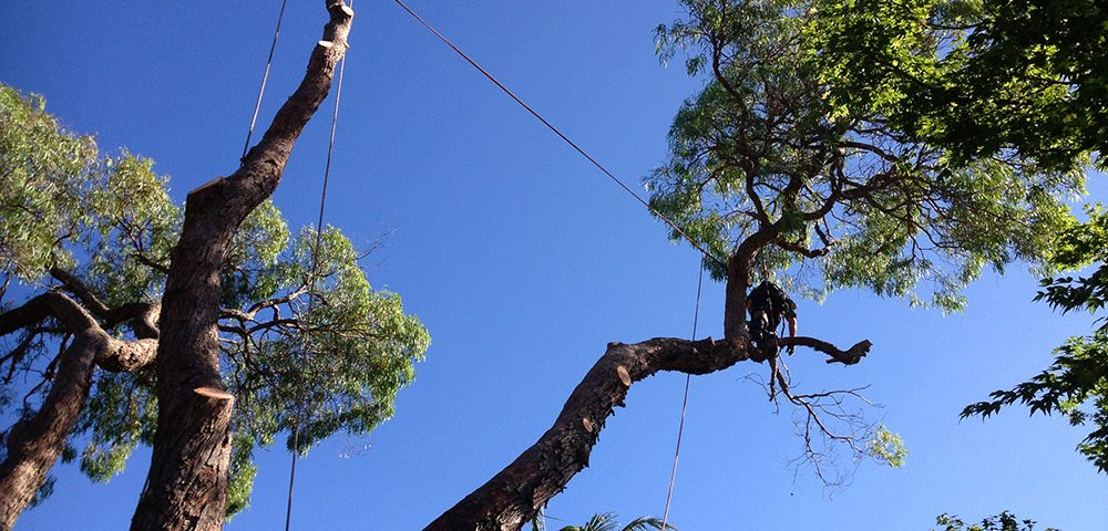 Tree Maintenance Services in Sydney