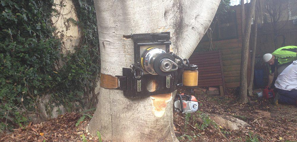 Tree Care Sydney
