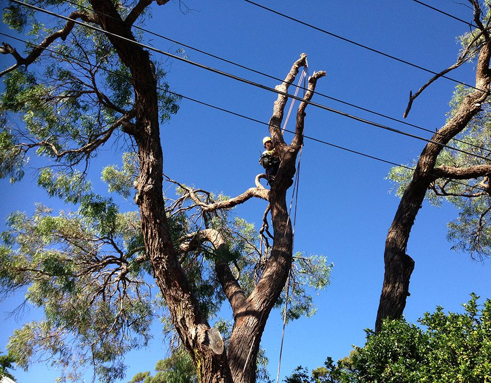 Affordable Tree Lopping Services