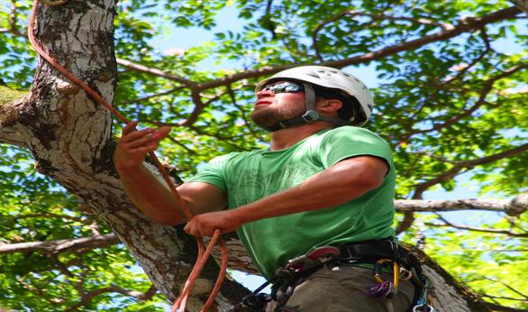 Qualified-Arborist