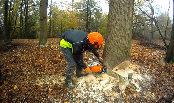 Tree waste removal