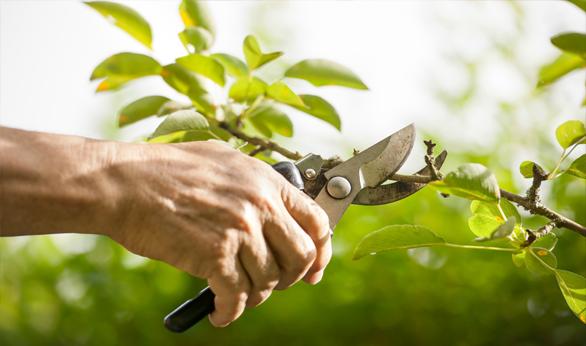 Qualified Arborist