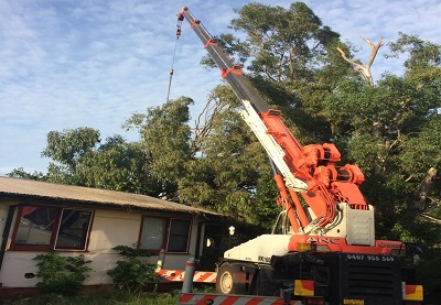 Affordable Tree Removal Service Ropes Crossing