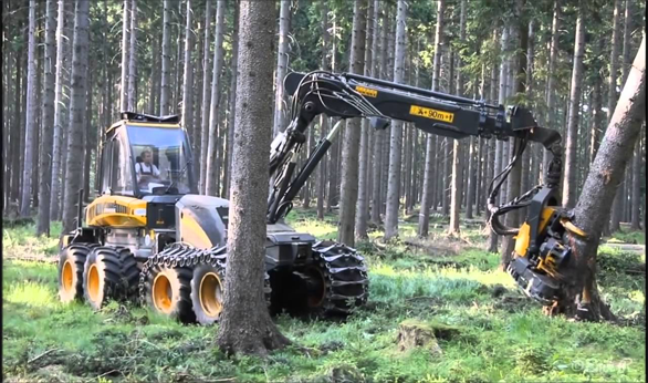 Affordable Tree Felling Services