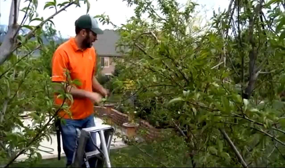 24/7 Emergency Tree Services