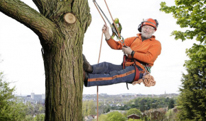 Affordable Tree Removal services Hills District