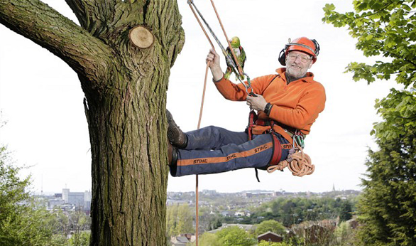 Affordable Tree Removal Service