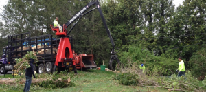 Tree Removing Services